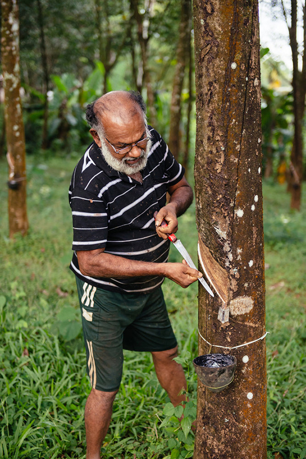 Authentic asian man working in rubber tree plantation