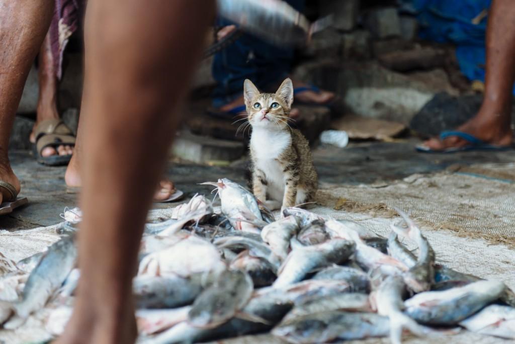 Коти чекають свою долю