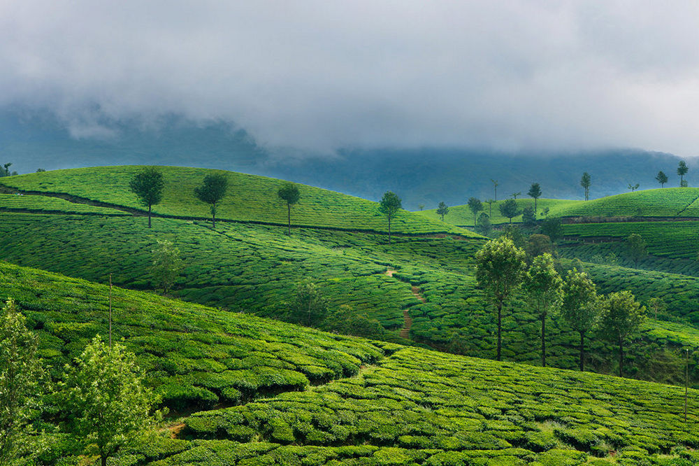 Green tea plantation hills in Munnar, Kerala, India. Beautiful mountain landscape
