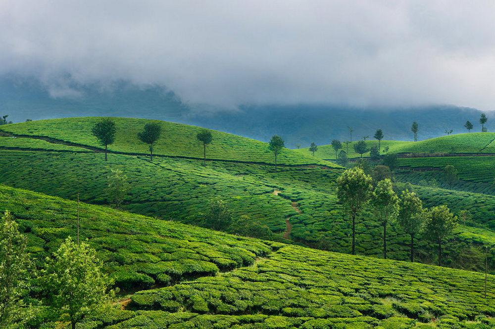 Green tea plantation hills in Munnar, Kerala, India. Beautiful mountain landscape