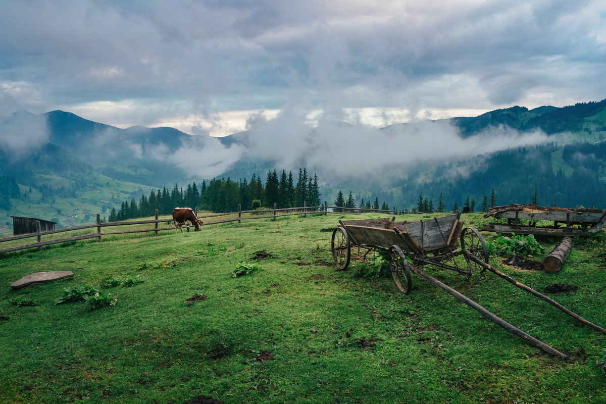 Mountain Ukrainian village Dzembronya covered by fog in the morning